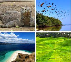 Flores and Komodo Islands, Indonesia