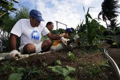 USP disponibiliza cursos gratuitos sobre meio ambiente e sustentabilidade