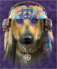 """What a cool picture! """"peace and love people, be calm!""""✌"""