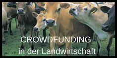 Crowdfunding etabliert sich so langsam auch bei uns in der Landwirtschaft. Geld über das Internet zu sammeln um neue Agrarprojekte zu finanzieren wird immer