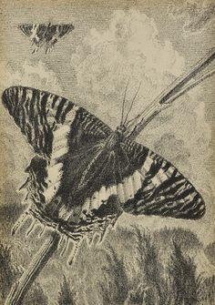 Max Švabinský, Butterfly - Urania, 1952