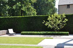Afgewerkte projecten door Jonas D'hoore | Sobere en moderne tuin met ruimte en dimensie Sober, Outdoor Furniture, Outdoor Decor, Garden Inspiration, Sun Lounger, Sidewalk, Exterior, City Gardens, Outdoors