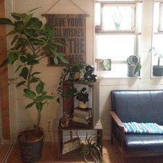 観葉植物は置いてあると安心感がありますし、インテリアとしても見栄えがします。そんな観葉植物のおすすめとお部屋コーデをご紹介しています。ご参考ください。