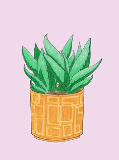 The Plants That Live In My House illustration by Lisette Spapens