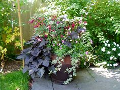 container for dappled shade featuring gorgeous Fuchsia standard