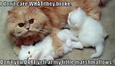 ...my little marshmallows.