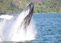 Spectacular whale watching on Ile St Marie Madagascar