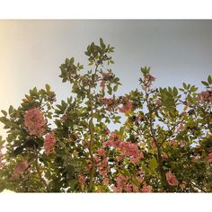 Flowers 🌸