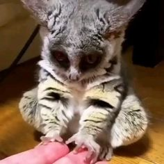 Cute Little Animals, Cute Funny Animals, Cute Cats, Big Cats, Funny Owls, Cute Animal Videos, Cute Animal Pictures, Animal Pics, Funny Pictures