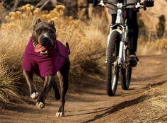 Ruffwear Climate Changer™ Fleece Dog Jacket  Ruby's performance fleece for chilly nights. We love Ruffwear's gear!