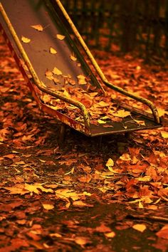 Autumn at the playground.