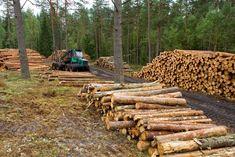 Unión Europea y FAO apoyan lucha contra tala ilegal en Centroamérica