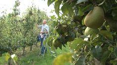 Perenteler zoekt perenplukkers