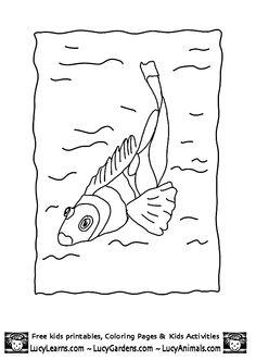 Dusky Farmerfish Stegastes Nigricans