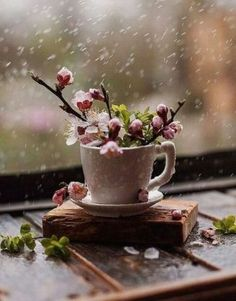 Ideas Of Planting a Windowsill Succulent Garden - Whether you get a massive garden, a tiny one, or even only an indoor window-sill, plants in containers can boost your house and be a terrific source of delight. by Joey