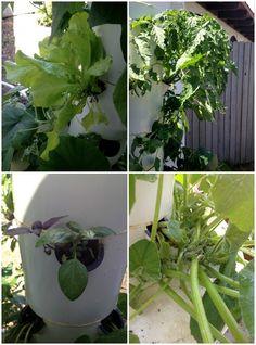 The Tower Garden- Aeroponic gardening ~ Real Food Family #sustainableliving #organicgardening #aeroponics #hydroponics