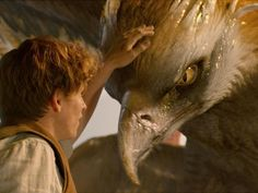 fantastic-beasts-and-where-to-find-them_d496cb84-a4cb-11e6-8311-ecdc6071292f.jpg (640×480)