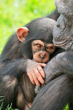 filhote de macaco com a mamãe