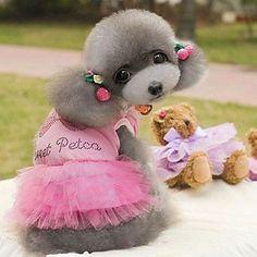 Aus der Kategorie Kleider  gibt es, zum Preis von EUR 43,00  HLQFür:Hunde,<br />Saison:Sommer,<br />Typ:Kleider,<br />Material:Baumwolle,<br />Farbe:Rosa, Blau,<br />Größe:XL, L, M, S, XS,<br />Netto Gewicht (kg):0.04,<br />Nacken (cm):XS:20,S:24,M:30,L:33,XL:36,<br />Rücken (cm):XS:21,S:25,M:30,L:33,XL:36,<br />Brust (cm):XS:30,S:36,M:42,L:48,XL:54,<br />