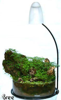 Paludarium created in a Do!aqua cylinder aquarium. Easy DIY project for the home! http://www.aquascapingworld.com/threads/i-made-a-do-aqua-cylinder-as-a-paludarium.8442/