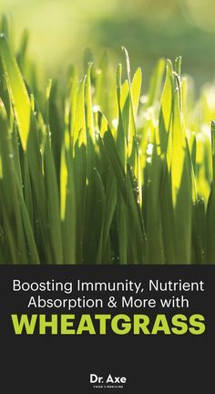 21 Wheatgrass Benefits, Including Boosting Immunity + Nutrient Absorption