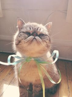 kitty cat with bow.