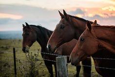 Bowral Horses Photos by Hilary Cam Photography