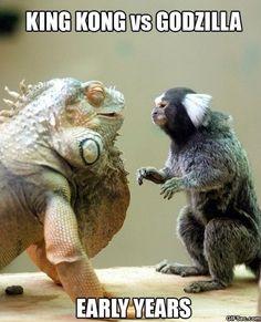 godzilla vs king kong | Funny-MEME-King-Kong-vs.-Godzilla.jpg