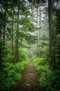 Hike a portion of the Appalachian Trail. A misty morning along the Appalachian Trail, Roan Mountain, Tennessee Beautiful World, Beautiful Places, Walk In The Woods, Appalachian Trail, Appalachian Mountains, Hiking Trails, Hiking Usa, Belle Photo, The Great Outdoors