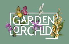 Love the spring season. Enjoy Garden Orchid in your garden. #garden