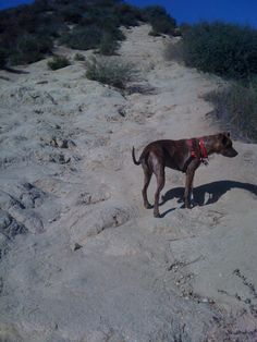 Roo @ Runyon Canyon
