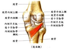 膝蓋中了一箭後當不成冒險家:為什麼膝蓋受傷不容易痊癒?