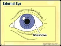 Video for Module 1: Ophthalmology Lecture - Eye Anatomy Part 1