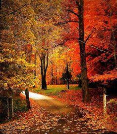 Beautiful colors of autumn