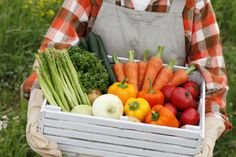 Making Your Backyard Garden a Success | Stretcher.com - Reduce your grocery bills with a backyard garden