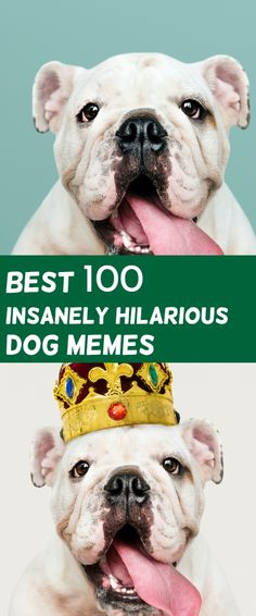 Dog Memes text Do you love Dogs? Well you will surely enjoy these super hilarious latest funny memes about dogs, make sure to share thes. Memes Humor, Funny Dog Memes, Funny Dogs, Humor Videos, Funny Chihuahua, Funny Boxer, Yorkie Dogs, Puppies, Funny Videos