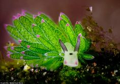 The colourful creature was captured in Bali by  amateur photographer Lynn Wu during a scuba diving trip to the country's shores