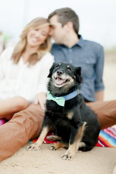 dogs in engagement portraits by © Luke & Ashley Photography | on location dog, engagement photos, beach dog, bow tie