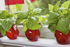 Growing new basil plants from cuttings--I didn't know this was possible! [The Cafe Sucre Farine]