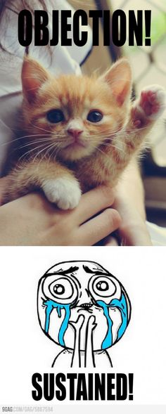 I need this cat on my mock trial team. <3  @Abby Christine Christine
