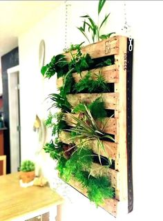 Even in winter we can still grow fresh herbs. In most regions the herb garden is now dormant, but with a little planning you can grow many culinary herbs indoors this winter. An indoor herb garden is not only functional, it can be attractive and provide Indoor Mini Garden, Small Backyard Gardens, Vertical Gardens, Vertical Planter, Indoor Outdoor, Outdoor Living, Large Backyard, Indoor Living Wall, Outdoor Ideas