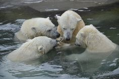 Polar bear committee meeting to discuss climate change