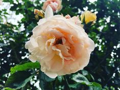 Vienna: Before the #storm #roses Vienna, Roses, World, Flowers, Plants, Instagram, The World, Pink, Flora