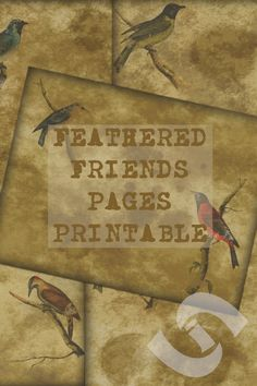 Give your junk journals and scrapbooks that vintage look with these faded bird themed printable pages. Printable Planner, Printable Wall Art, Printables, Vintage Birds, Vintage Ephemera, Etsy Crafts, Handmade Crafts, Digital Journal, Digital Art