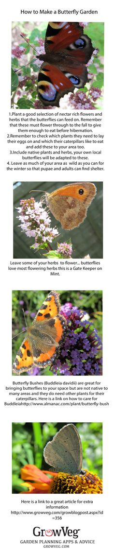 How to plant a Butterfly Garden.
