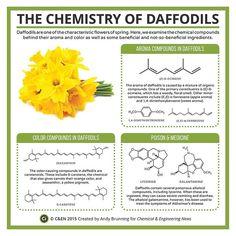 09315-scitech2-daffodils-690