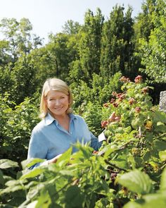 Ripe for the Picking: Growing Berries at Martha's Farm - Martha Stewart Gardening
