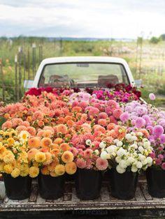 Foto con flores