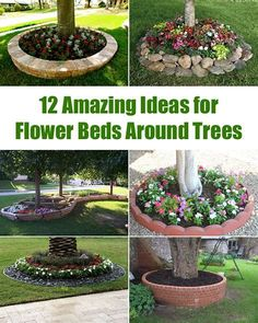 Image result for Flower Beds Around A Tree