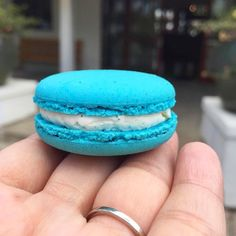 The Honolulu Coffee Experience Center's bake shop churns out about 250 pieces of baked goods a day. The bake shop makes eight different flavors of macarons including this vanilla macaron the color of Cookie Monster. Link in bio. : @catherinetoth